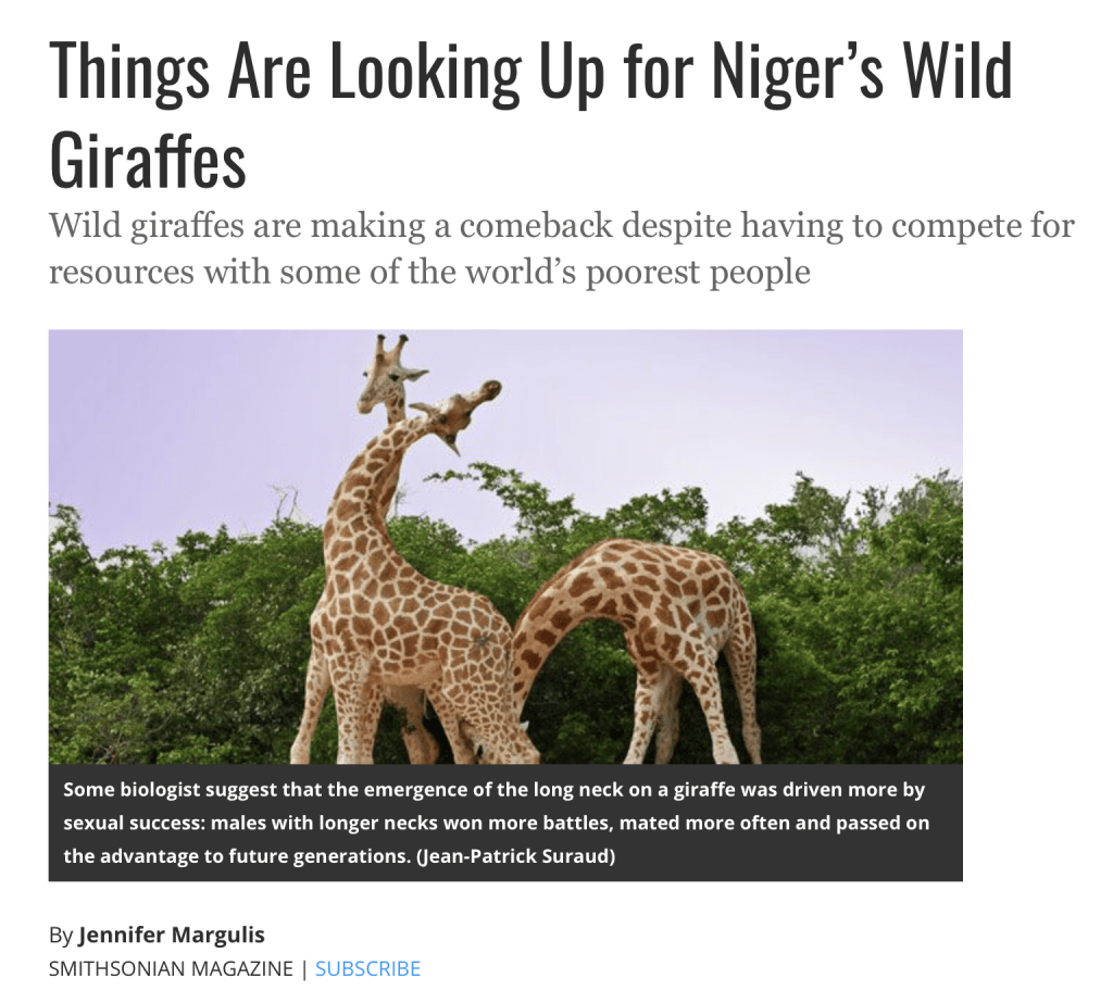 Things are looking up for Niger's giraffes. Wild and free, adapted to a harsh environment, they are tenaciously holding onto life.