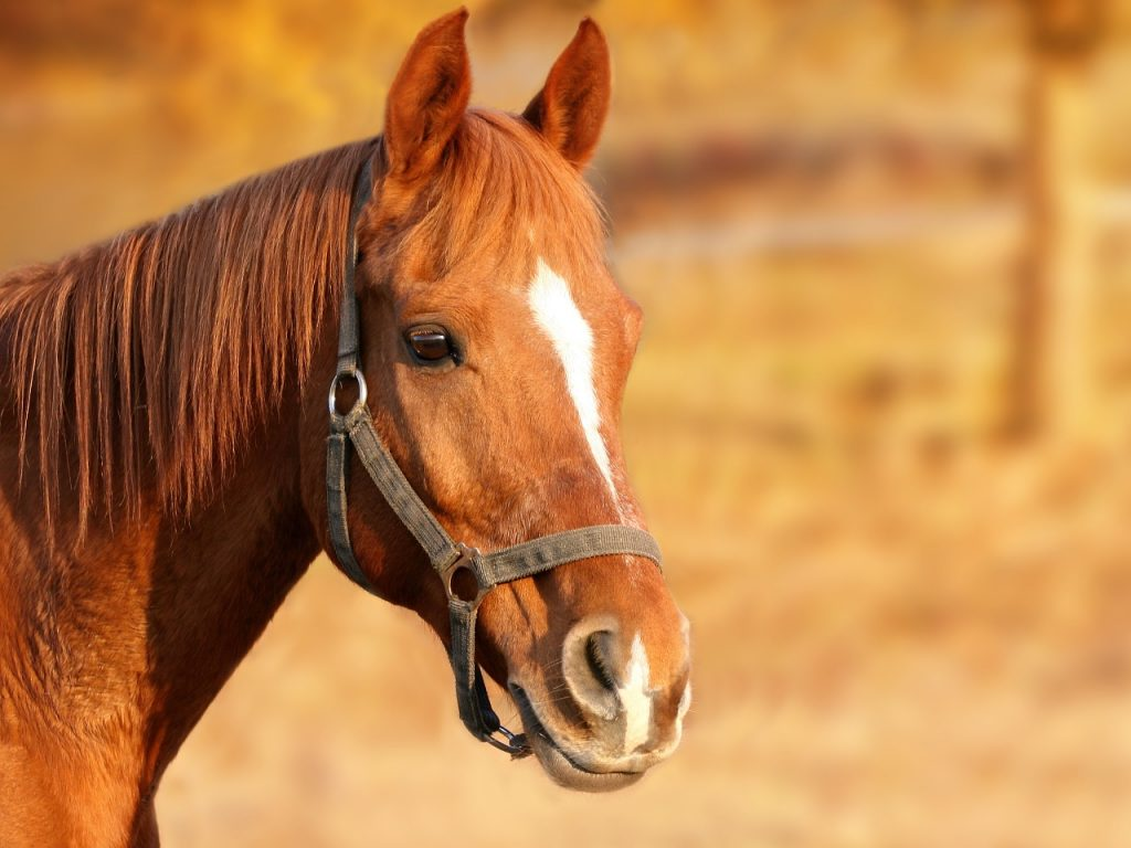 Dream Ridge Stables in Oregon City offers lessons, trail rides. Photo of a beautiful brown horse via Pixabay.