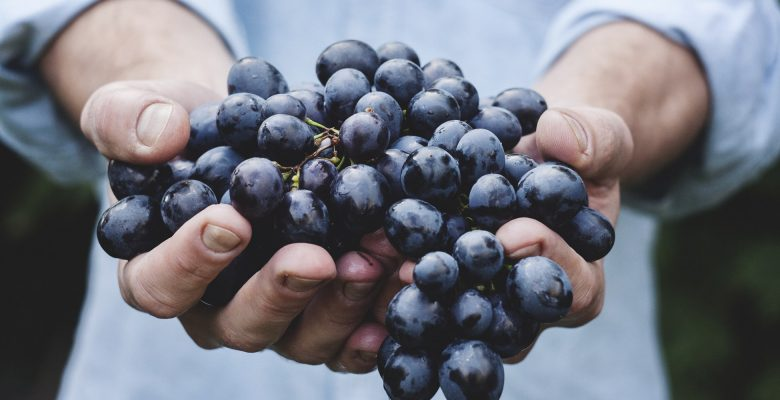 Walla Walla wines, especially their reds and syrah, are becoming increasingly appreciated. Photo of a person holding grapes courtesy of Maja Petric.