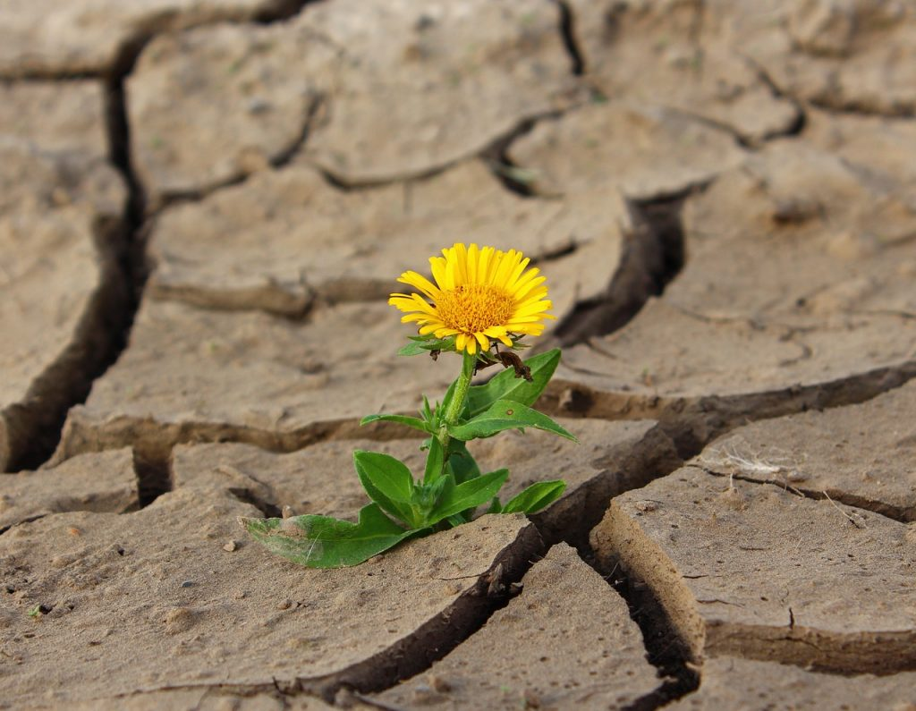 Believe in miracles. A dandelion grows out of the parched earth. There is beauty everywhere. | Jennifer Margulis
