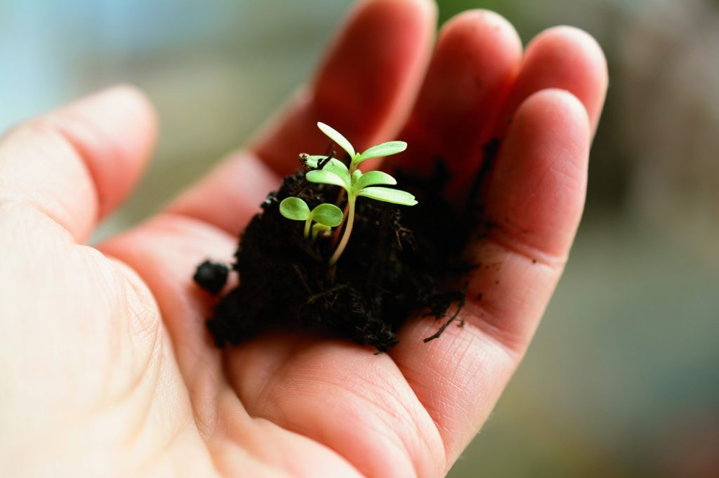A new dad feels deeply conflicted about vaccinates. Photo of some sprouts in dirt in the palm of a hand courtesy of Pixabay. | Jennifer Margulis, PhD
