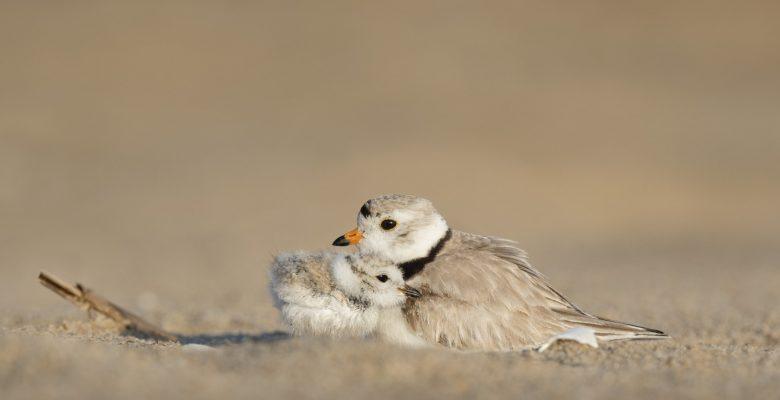 Two little birds huddle together. Photo courtesy of Ray Hennessy | Jennifer Margulis