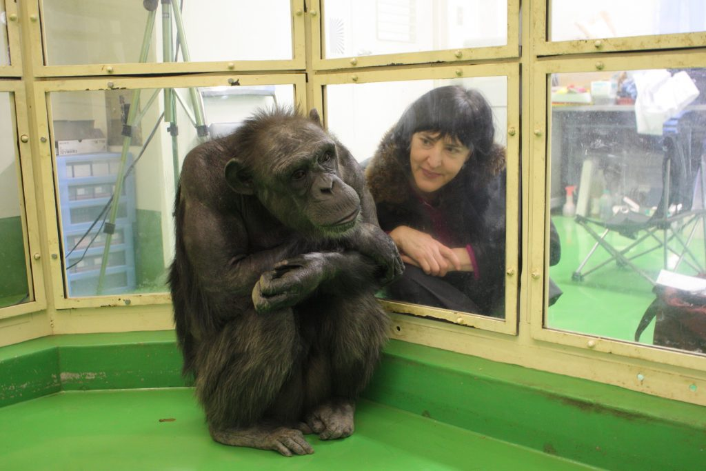 Virginia Morell with Ai, a chimpanzee and memory-whiz