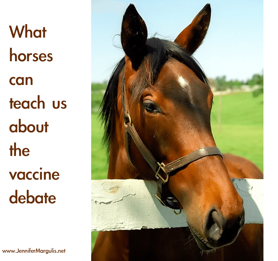 What horses can teach us