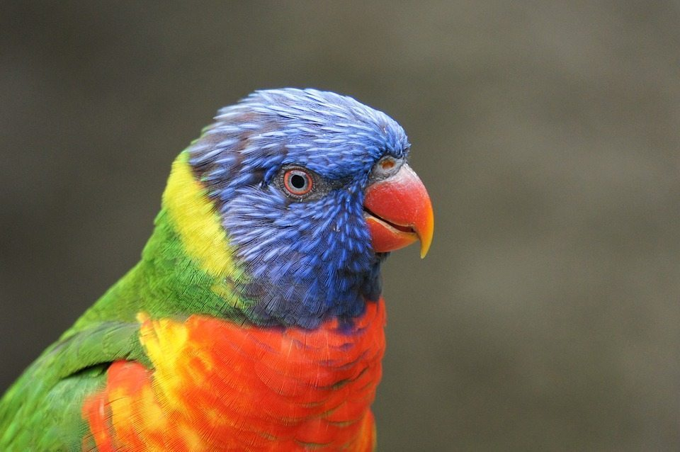 When a beloved parrot gets injured, his human companion finds an unorthodox way to save his life.