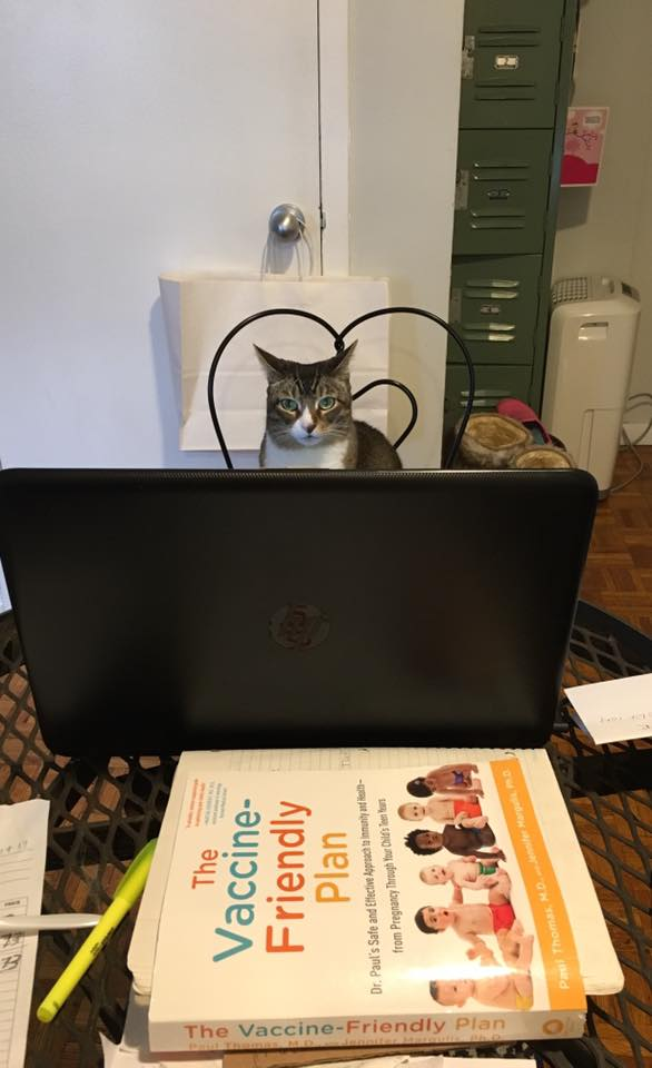 NYC doula's cat Sadie is reading the Amazon bestseller, The Vaccine-Friendly Plan by Dr. Paul Thomas and Dr. Jennifer Margulis