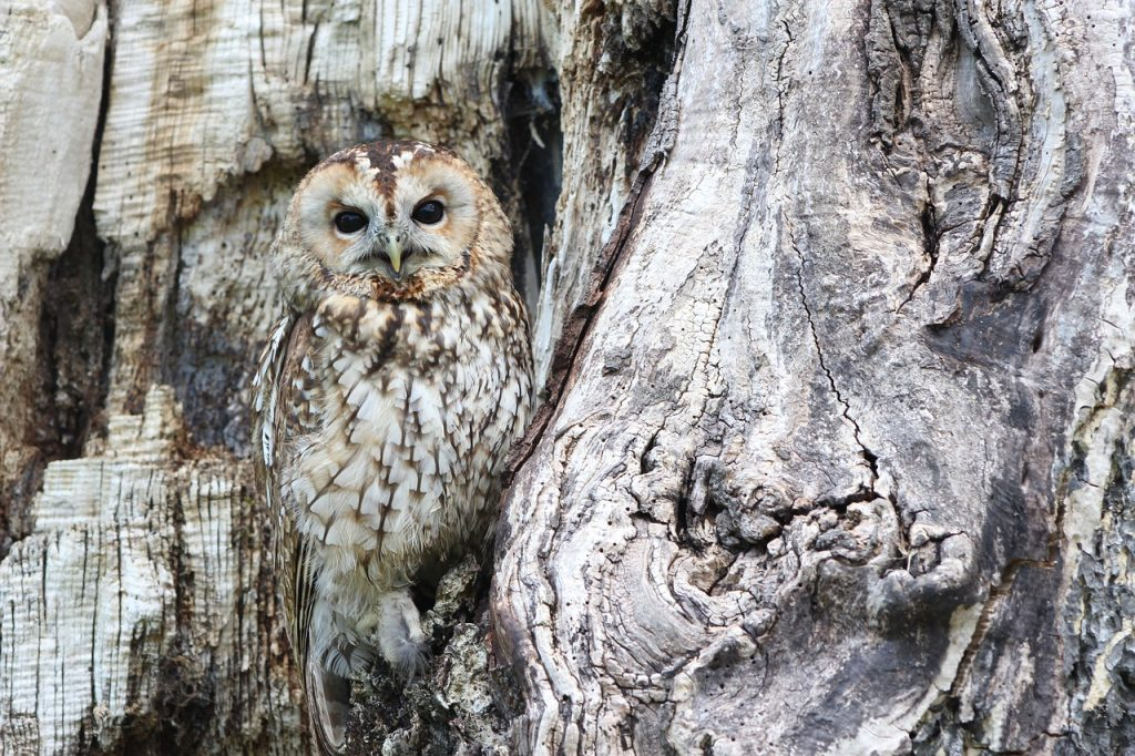 When you visit the Lower Klamath Basin in Oregon you will see many different birds of prey including bald eagles, owls, kestrels, and red-tail hawks   Jennifer Margulis