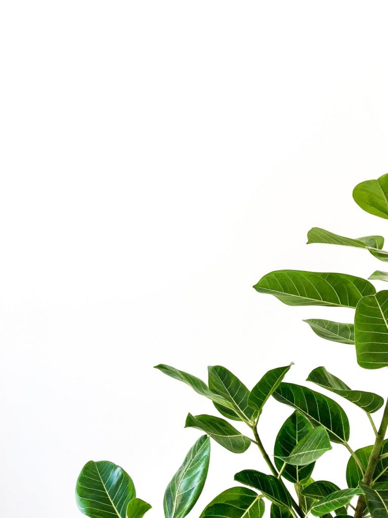 Photo of a green plant by Josh Calabrese via Unsplash. Try having a green birthday party instead of a conventional one! Jennifer Margulis, Ph.D.